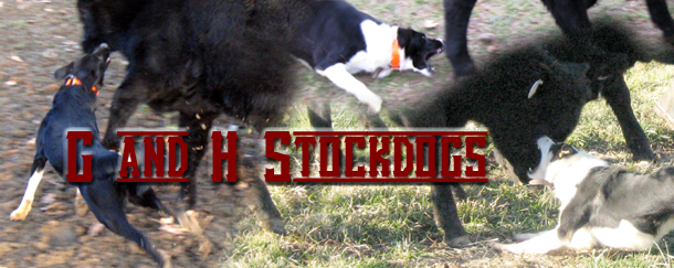 G and H Stockdogs - producing G And H Border Collies